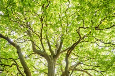 Green energy 2021